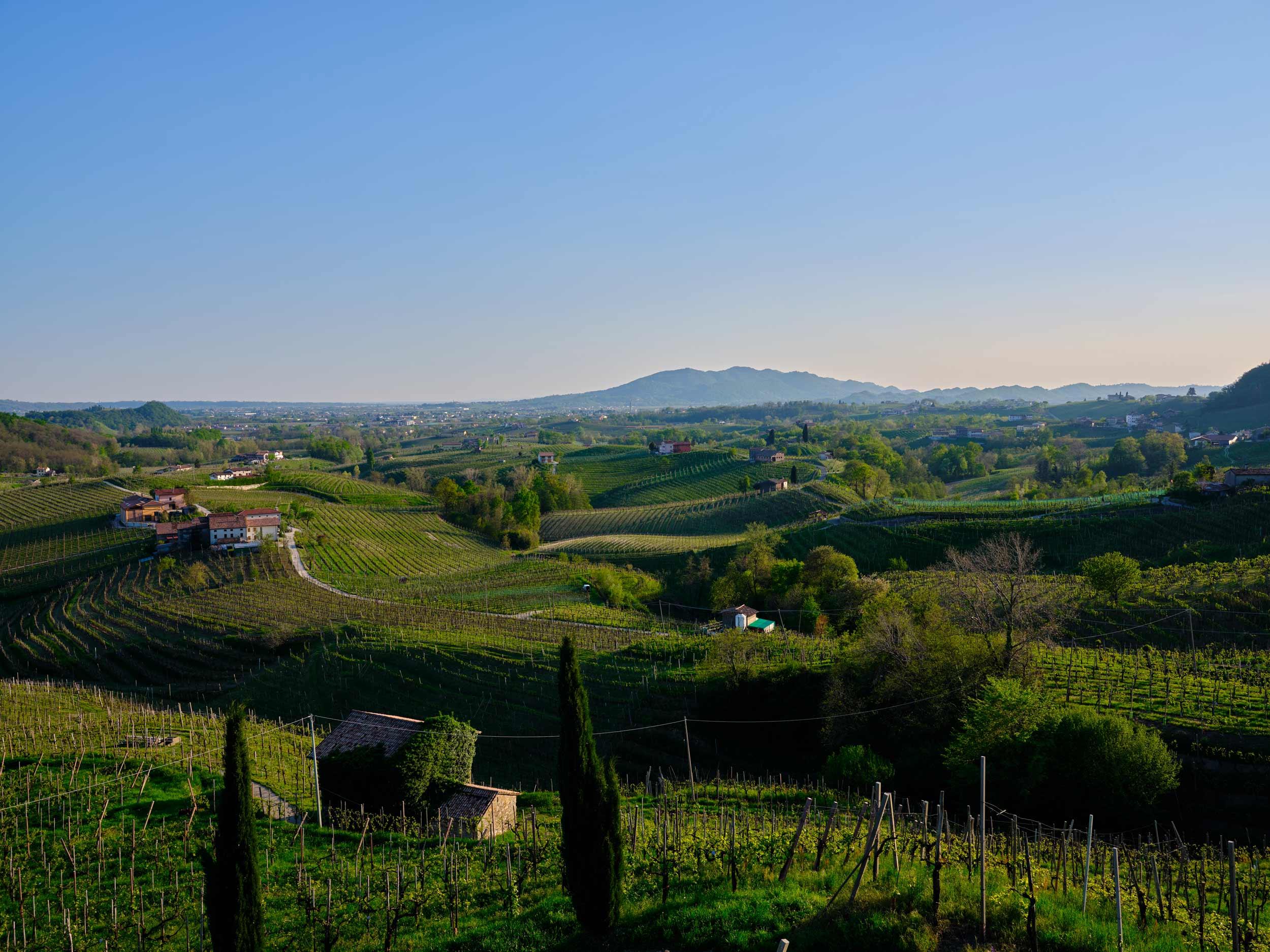 Foto-sito-web-cantina-vino